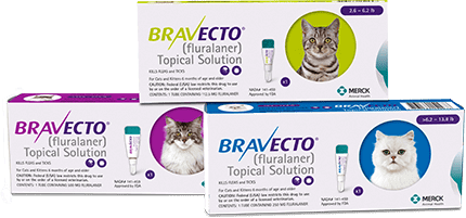 Bravecto For Cats Canada