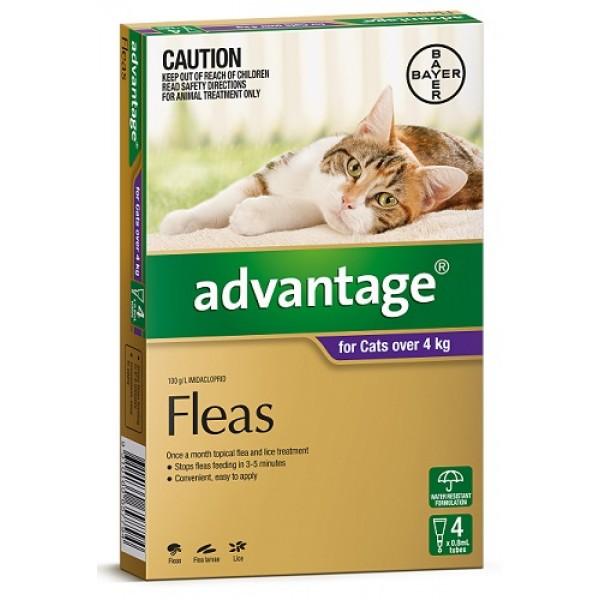 bayer advantage for cats reviews productreview com au rh productreview com au