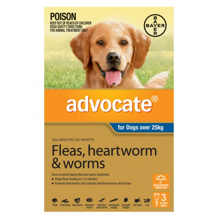 Advocate For Dogs Reviews