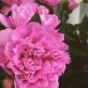 Florist Megan